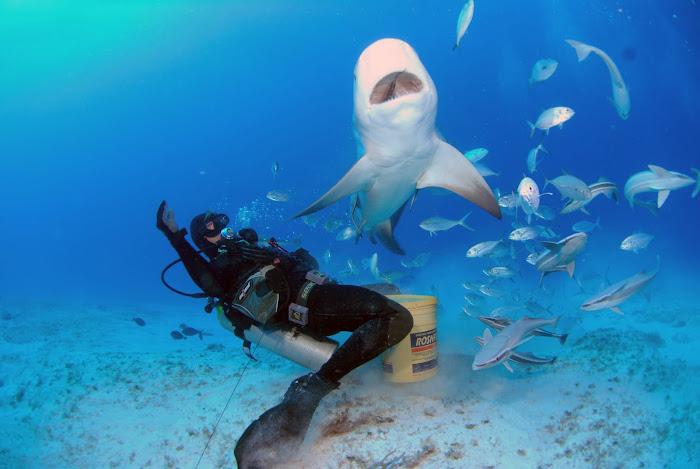 Buceo eXtremo! Tiburón Toro PLAYA DEL CARMEN