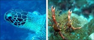 Lokasi Menyelam terbaik Indonesia