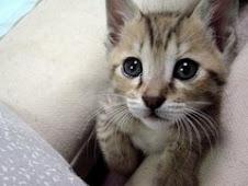 miau miau miau