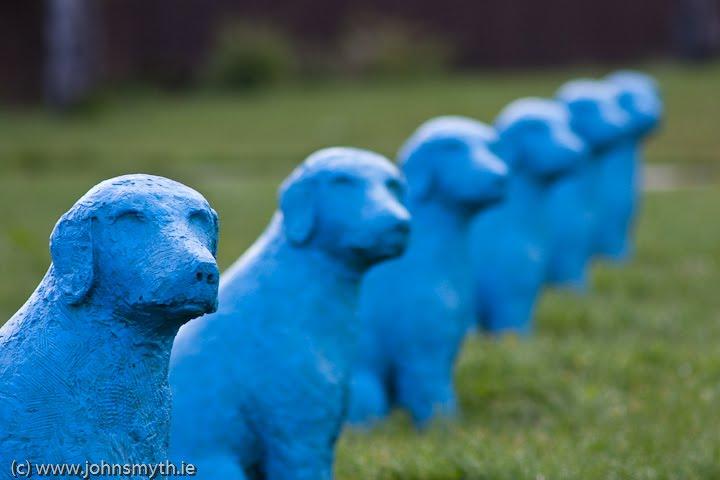 Blue Dog Key Related Keywords - Blue Dog Key Long Tail ...