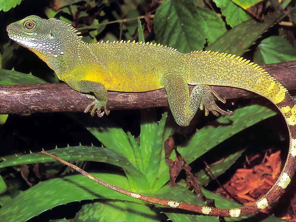 desaparicion de reptiles