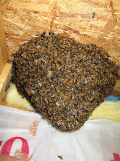Winter Park Live Bee Removal