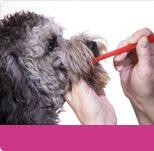 La importancia del cepillado dental en los perros