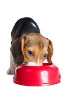 alergia alimenticia en perros