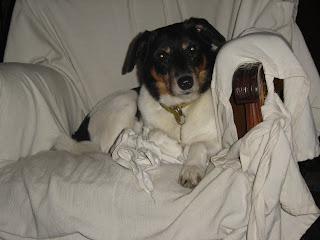 diario del perro