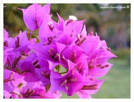 Del color de estas lilas era ES la luz Pizarnik que respiré