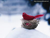 Red Bird Desktop Wallpaper