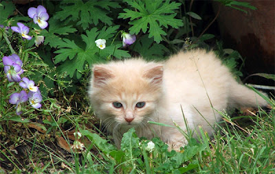 kitten cats Healthy White Breeds Cats Photo