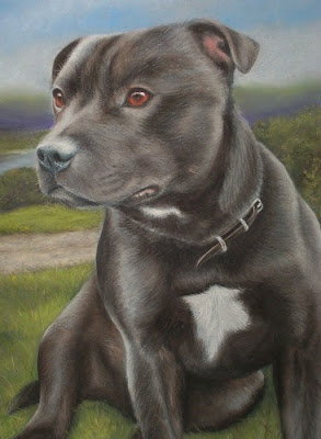 Staffordshire Bull Terrier Dogs Pics
