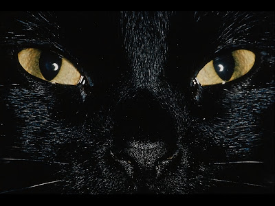 Cats - Black Cat Wallpaper