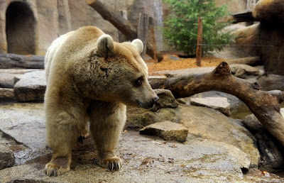 Brown bears Roan and Honey enjoy Pics