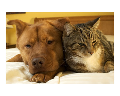 pictures of dogs and cats. Dogs and Cats Gallery Photos