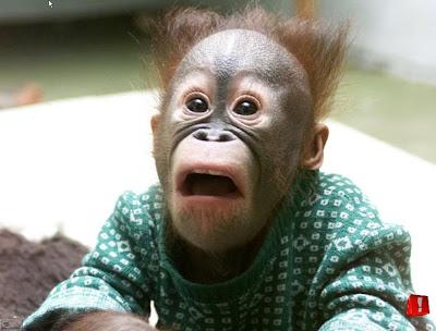 Funny  Monkey Pics