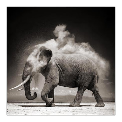 Wild Animals Elephant Picture