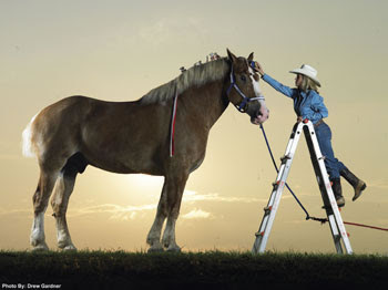 Tallest Animals Horse Picture