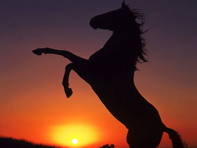 Sunset Animal Horse Photo