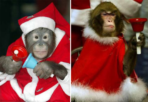 Animals Zoo Park: Animals Christmas Funny Animals Santa Hat Pics and ...