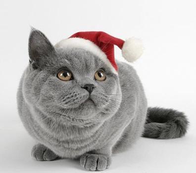 http://1.bp.blogspot.com/_N_mOB63qPaE/TP-i8FDzqYI/AAAAAAAARNM/YJmD42NIlTg/s400/christmas-funny-cat.jpg