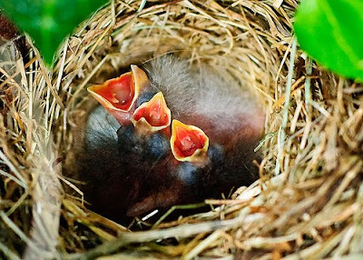 Innocent Bird Babies Photo