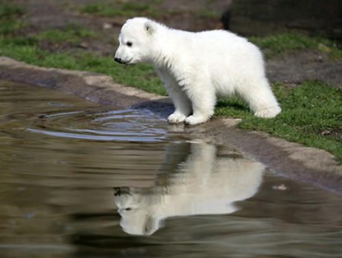 cute-polar-bear-cub-photos.jpg