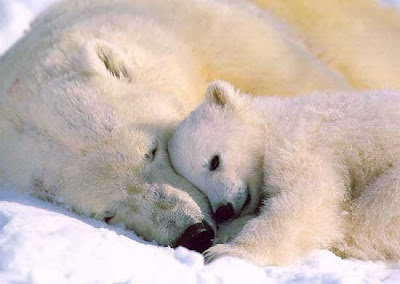 Cute Polar Bear Pics