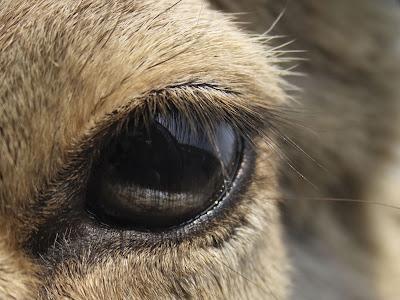 Deer Wallpaper-For-Desktop