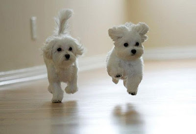 Beautiful Puppies Picture