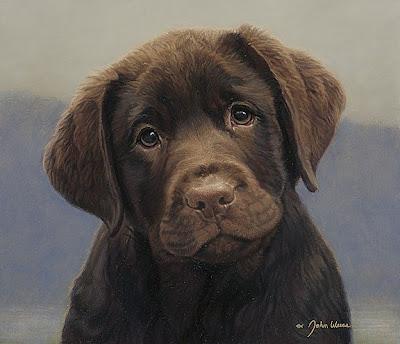 Innocent Dog Photo