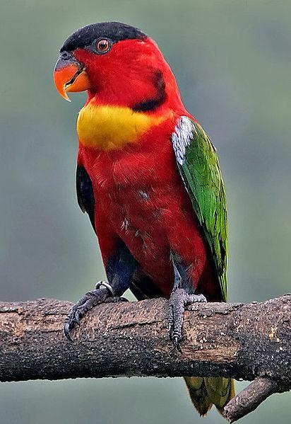 Unique Animals blogs: 10 Colourful Birds Pictures, Birds ...