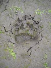 Archive:  Footprints in the Mud...