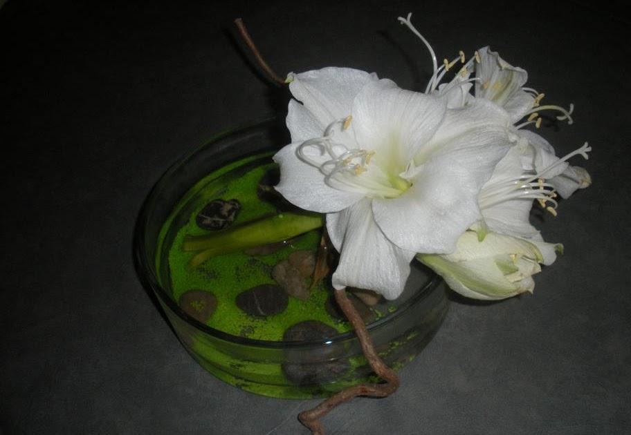 Compositions florales amaryllis de no l for Amaryllis de noel
