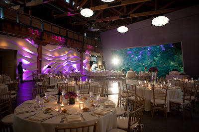 Seattle Aquarium At Night First Weddings Of The Decade