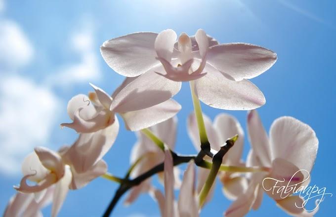 Una de Orquideas