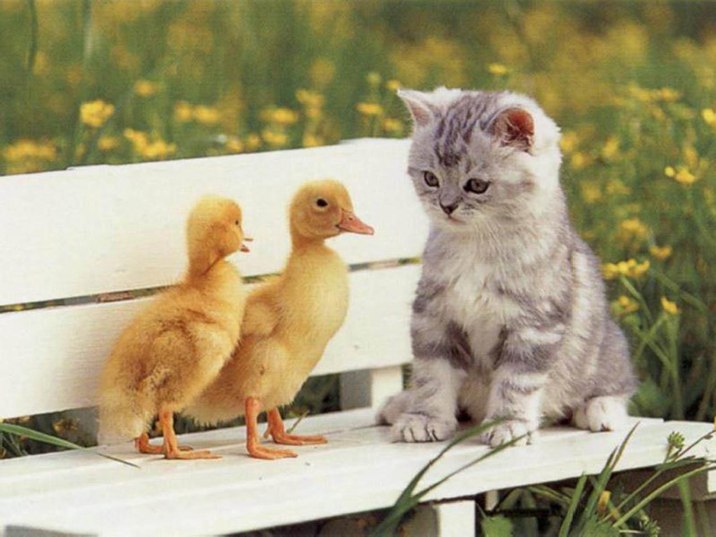Galería de fotos e imágenes de gatitos tiernos .