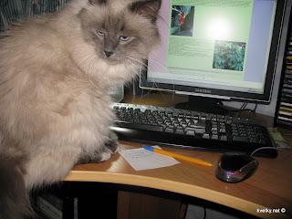 даже коты читают мой блог