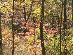 Shenandoah Forest
