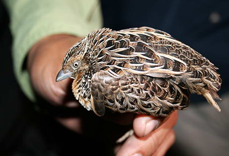 burung%2Bpunah - New discover species. - Science and Research