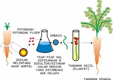 Mc. Firmansyah Blogs (biologi and all about you need )
