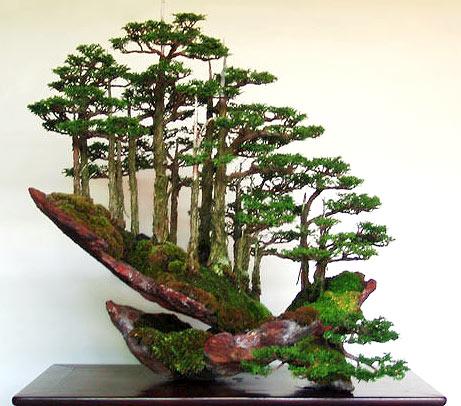 [bonsai1.jpg]