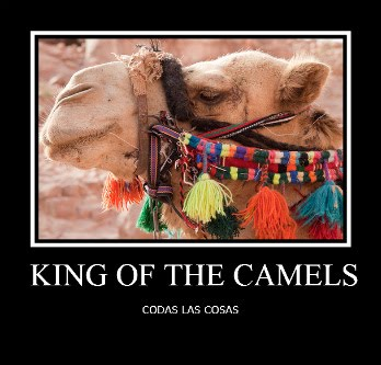 king of the camels