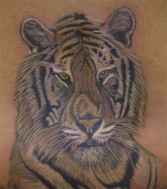 tattoo tiger. The Tiger Tattoo Portrait is