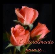 Que lindas rosas...
