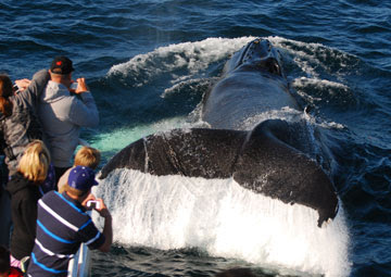 Naturalists aboard Captain John Whale Watching and Fishing Tours