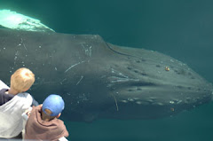 Encounter of the humpback kind! Join NECWA and help us protect coastal marine wildlife.