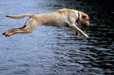 diving+swimming+dog - Você esta com Calor? Imagina o seu cão?