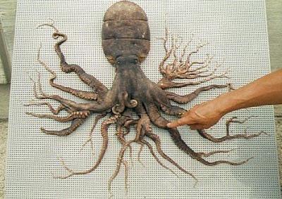 caracatita cu multe tentacule