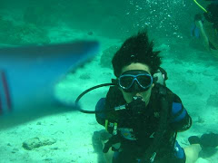 Dive with shark