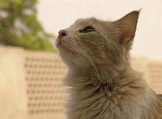 Can Animals Detect Natural Disasters