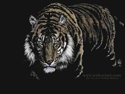 tigers wallpapers. tigers wallpapers. wallpapers