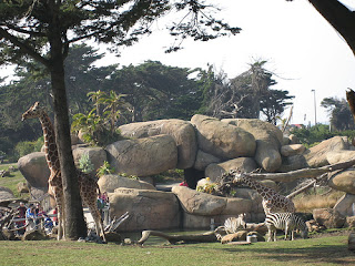 African Savanna at SF Zoo